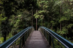 Bridge into wildness